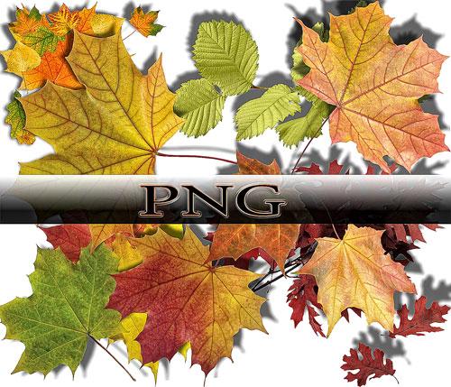 Клипарт листья тропических растений » Портал о дизайне - PixelBrush | 429x500