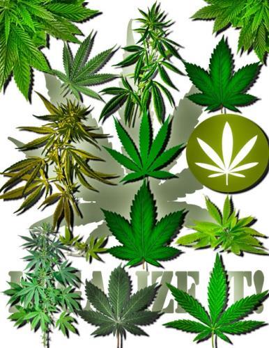 Футаж конопля как делать марихуана видео